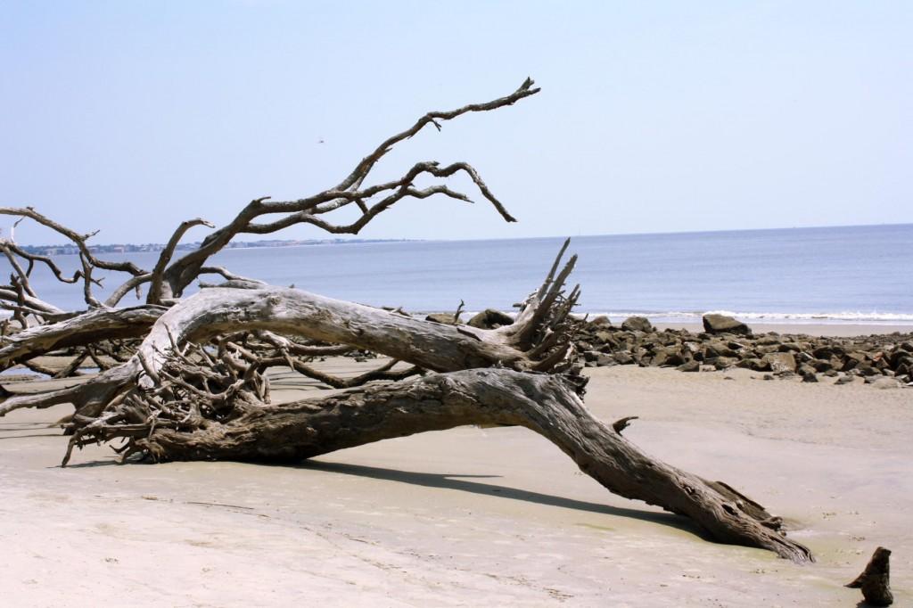 Driftwood Beach, Jekyl Island, GA
