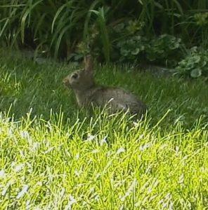 Bunny Metaphors Abound
