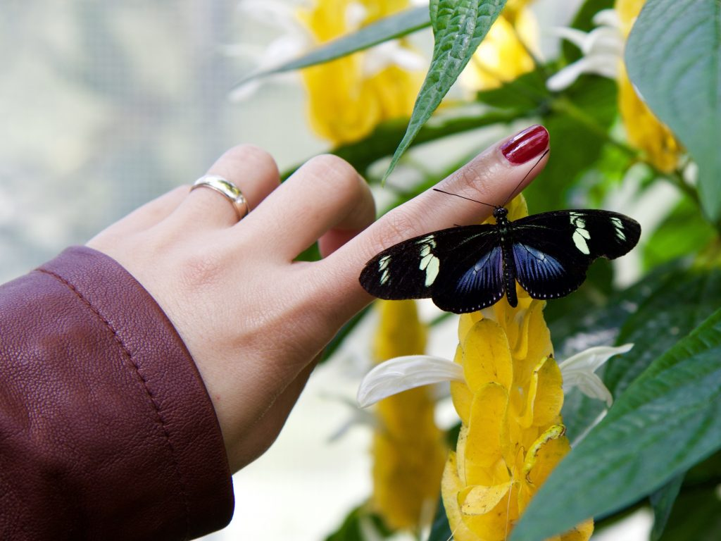 Woman's hand with buttrfly resting on finger